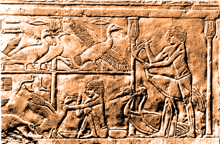 Gavage en Egypte